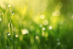 Water drops on the green grass (Shallow Dof)