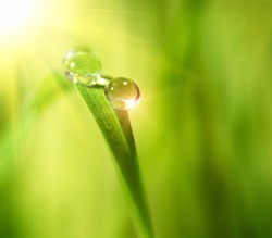 Water drops on the green nature background