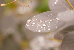Water drops on the leaves after the rain