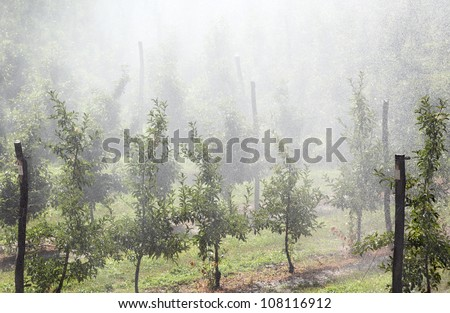 Water drops over apple orchard in hot summer day
