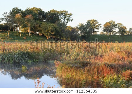 Water edge at beach meadow