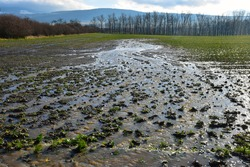 water erosion stream eroding agriculture field in spring landscape causing crop damage