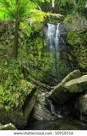Water falls gently into a rocky pool beneath a palm tree in the El Yunque rainforest in the Caribbean National Forest, Puerto Rico