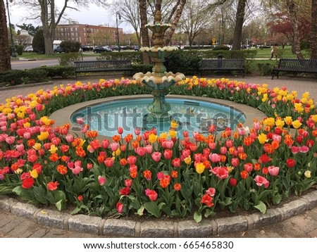 Water fountain surrounded by tulips in Garden City, Long Island, NY