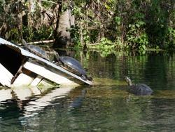water hut turtle sun