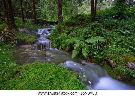 Water in the forest