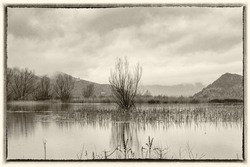 Water is lifted high in the swamp on a cloudy winter day. Old sepia processing.