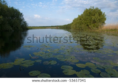 Water Landscape with Water Lilies Leaves