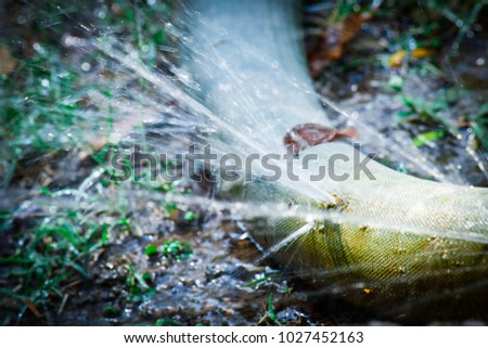 water leaking.leak form rubber tube or hole in a hose in the garden. #1027452163