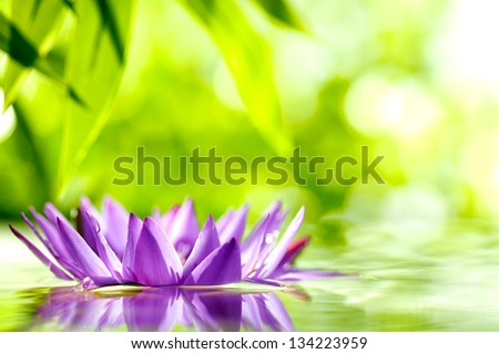 water lily float on water with natural green background.