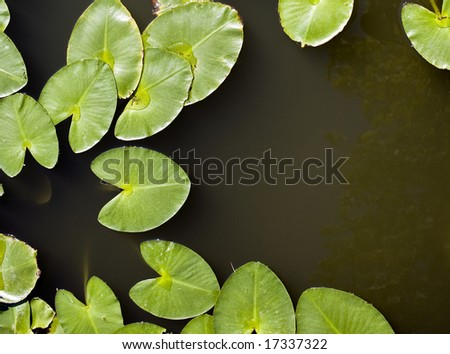 Water lily leaves, otherwise known as lily pads