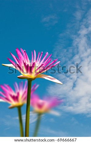 Water lily on blue cloud sky background