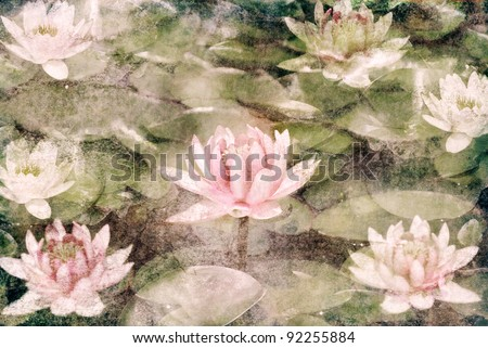 Water Lily on grunge textured canvas