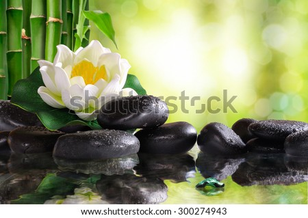 Water lily on lots of black stones reflected in water in nature. Concept of calm and relaxation. Alternative treatments, massage, balance and meditation. Horizontal composition.