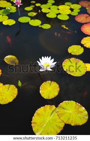 Water lily pond #713211235