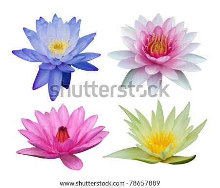 Water lily set isolated on white - stock photo
