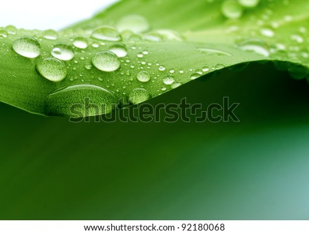 water on a plant leaf