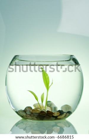 Water plant in a fish tank