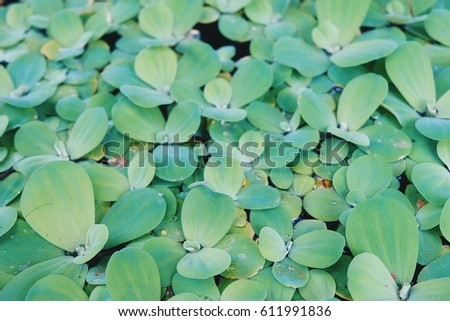 Water plants are beautiful green. Beautiful green water plants. #611991836