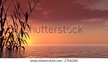 Water plants at sea sunset -  3D scene.