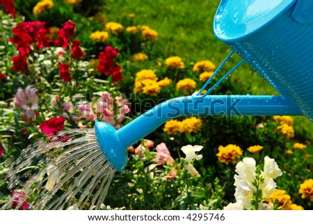 Water pouring from blue watering can onto blooming flower bed - stock photo