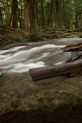 Water running past a fallen tree limb in Swallow Falls State Park