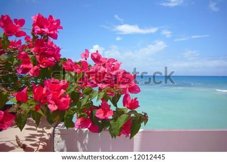 Water, sky & flowers. - stock photo