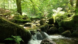 Water Source inside the Black Forest