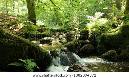 Photo of  Water Source inside the Black Forest