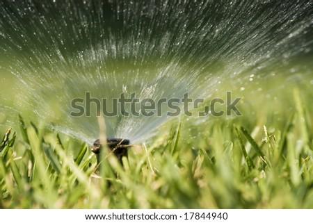 Water splashing from a sprinkler hidden in the grass.
