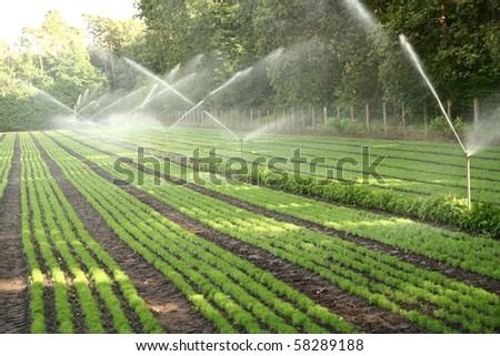 Working of sprinkler system