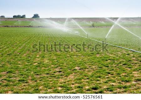 Water sprinklers irrigating a field