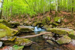 water stream in the beech forest. wonderful nature scenery in spring, trees in fresh green foliage. mossy rocks and boulders on the shore. warm bright weather