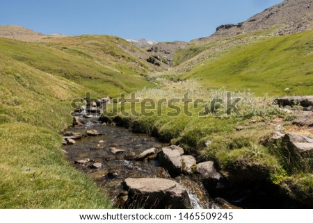 Water stream with alpine vegetation at 2500m in Sierra Nevada national park. Andalusia, Spain.