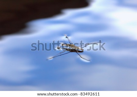 water strider on a blue surface
