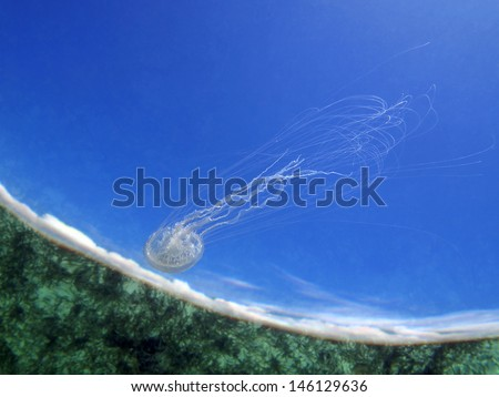 Water surface with ocean floor reflected and a Warty jellyfish with blue sky and clouds in background - stock photo