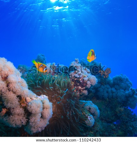 Water surface with sunrays underwater coral garden with anemone and a pair of yellow clownfish