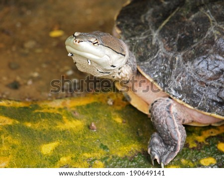 Water turtle #190649141