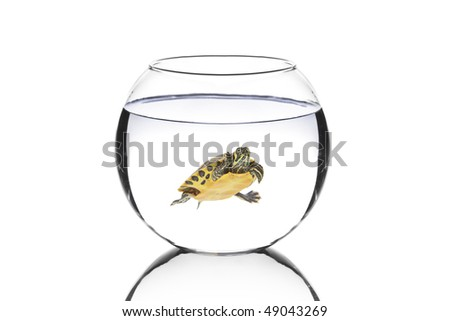Water turtle in a bowl isolated on white background