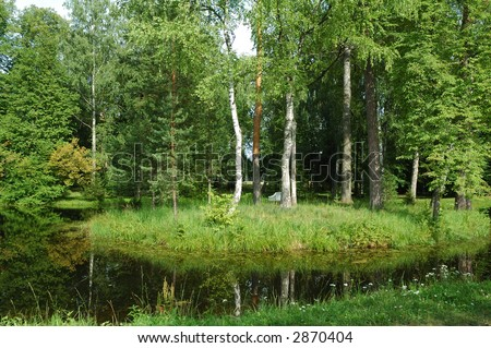 Water with reflection in the forest