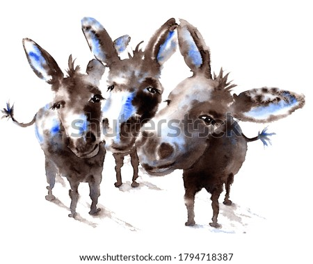 Watercolor 3 amigos Donkeys Painting  Foto stock ©