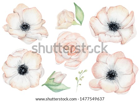 Watercolor anemone rose flowers hand drawn illustration isolated on the white background Stockfoto ©