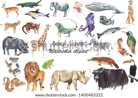 Watercolor animal illustration. Animal for every letter of English Alphabet. Watercolor hand drawn and hand painted clip art, high resolution, 300 dpi