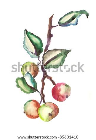 Watercolor -Apple branch-