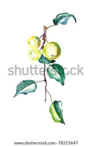 Watercolor apple branch, artist marina grau