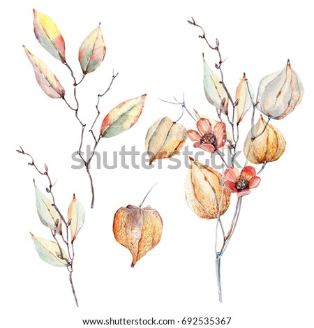watercolor autumn composition. Summer or autumn decoration floral bohemian design. Watercolor isolated.