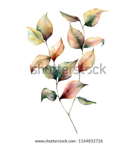 Watercolor autumn plant bouquet. Hand painted leaves and branch isolated on white background. Botanical illustration for design. Fall print