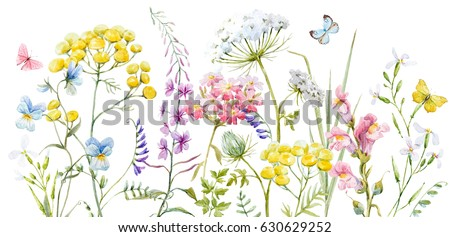 Stock Photo Watercolor banner with wildflowers, tansy, yellow buttercup, blue pansies, tender pink flowers and butterflies