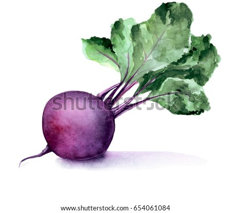 Watercolor beetroot for your menu, cookbook or other ideas