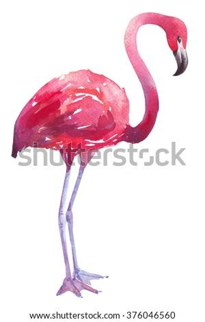 watercolor bird exotic flamingo